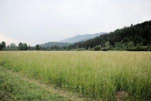 terrain construction